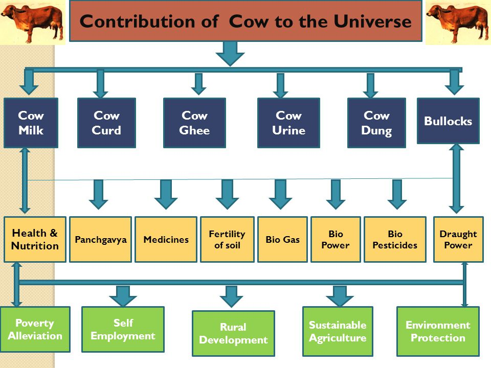 Cow Milk Cow Curd Cow Ghee Cow Urine Cow Dung Bullocks Health & Nutrition PanchgavyaMedicines Fertility of soil Bio Gas Bio Power Bio Pesticides Draught Power Poverty Alleviation Self Employment Rural Development Environment Protection Sustainable Agriculture Contribution of Cow to the Universe