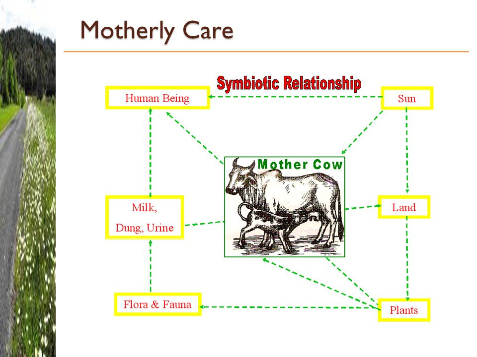 Motherly Care