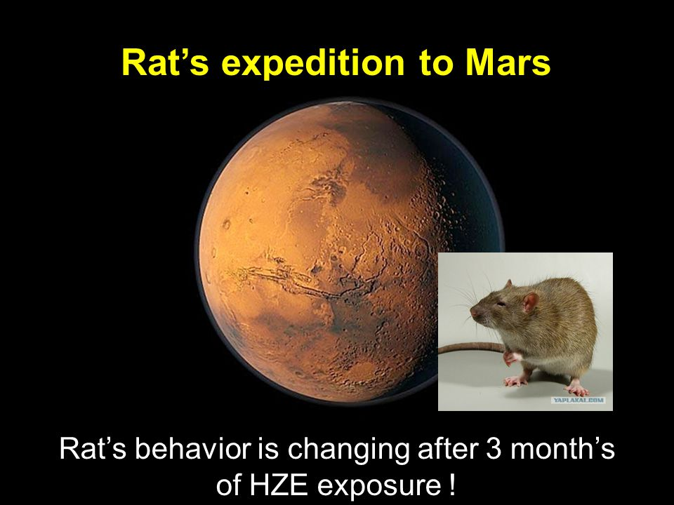 Rat's expedition to Mars Rat's behavior is changing after 3 month's of HZE exposure !