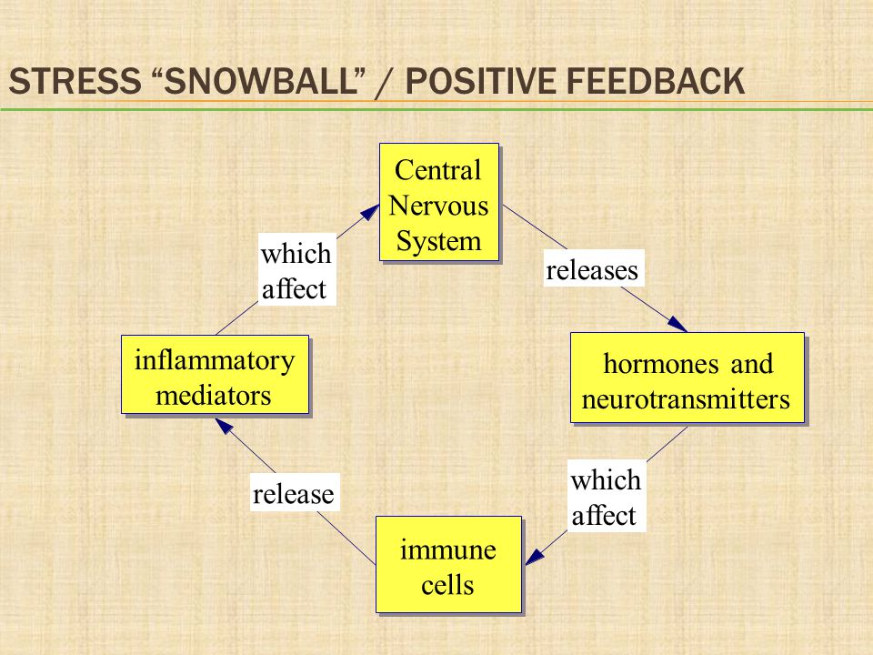 """releases which affect release which affect Central Nervous System hormones and neurotransmitters immune cells inflammatory mediators STRESS """"SNOWBALL"""""""