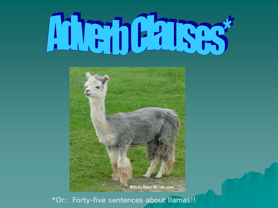 *Or: Forty-five sentences about llamas!!