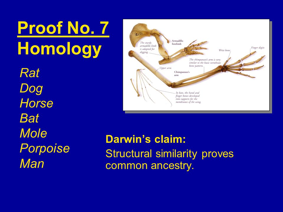 Darwin's claim: Structural similarity proves common ancestry. Proof No. 7 Homology Rat Dog Horse Bat Mole Porpoise Man