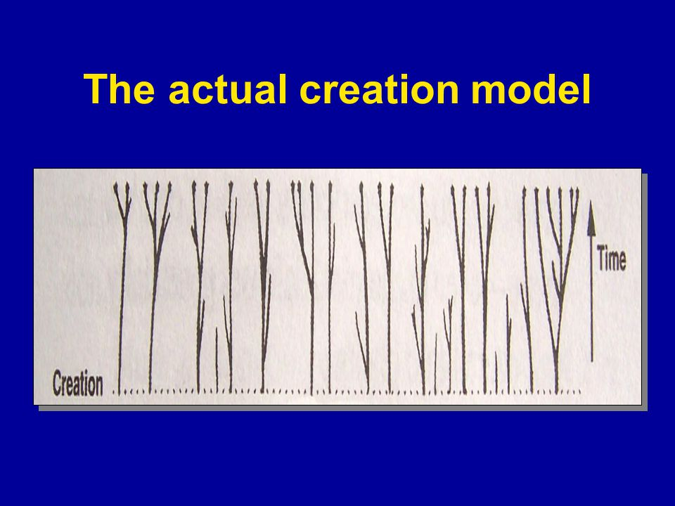 Small changes (micro-evolution) + Millions of years = Big changes (macro-evolution) The central Darwinian Claim