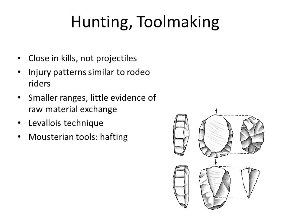 Hunting, Toolmaking Close in kills, not projectiles Injury patterns similar to rodeo riders Smaller ranges, little evidence of raw material exchange Levallois technique Mousterian tools: hafting