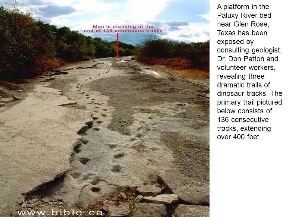 A platform in the Paluxy River bed near Glen Rose, Texas has been exposed by consulting geologist, Dr.