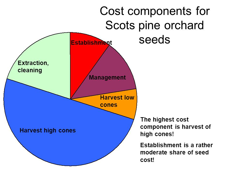 Harvest high cones Establishment Cost components for Scots pine orchard seeds The highest cost component is harvest of high cones.