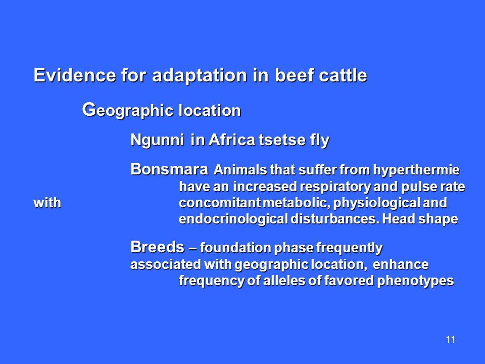 11 Evidence for adaptation in beef cattle G eographic location Ngunni in Africa tsetse fly Bonsmara Animals that suffer from hyperthermie have an increased respiratory and pulse rate with concomitant metabolic, physiological and endocrinological disturbances.