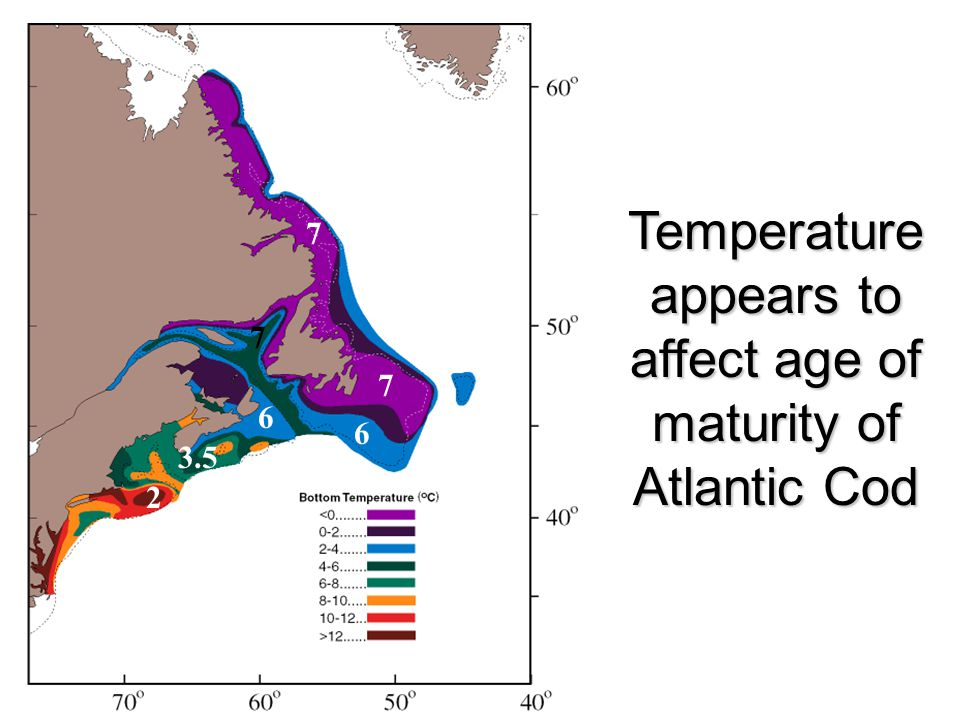 Combining age of maturity of different cod stocks from Hutchings and Myers (1993) with bottom temperatures from Brander (1994).
