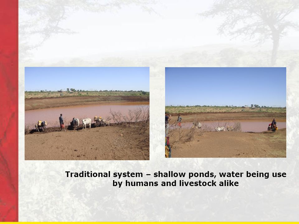 Traditional system – shallow ponds, water being use by humans and livestock alike