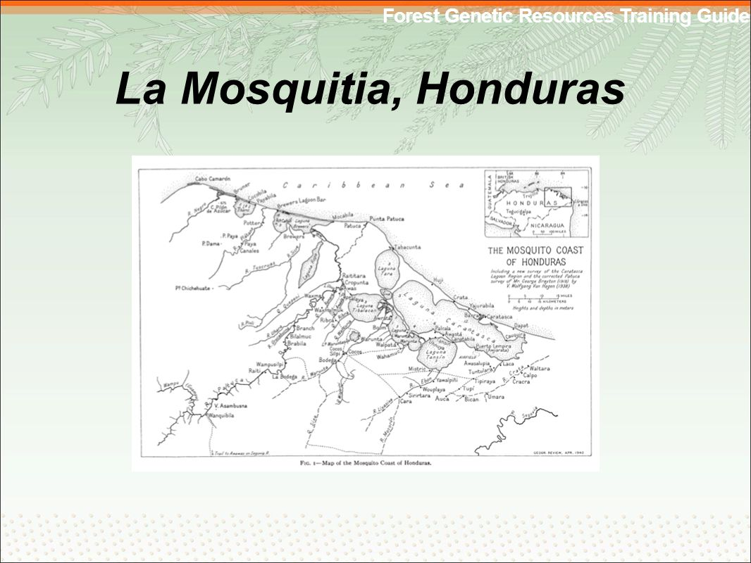 Forest Genetic Resources Training Guide La Mosquitia, Honduras