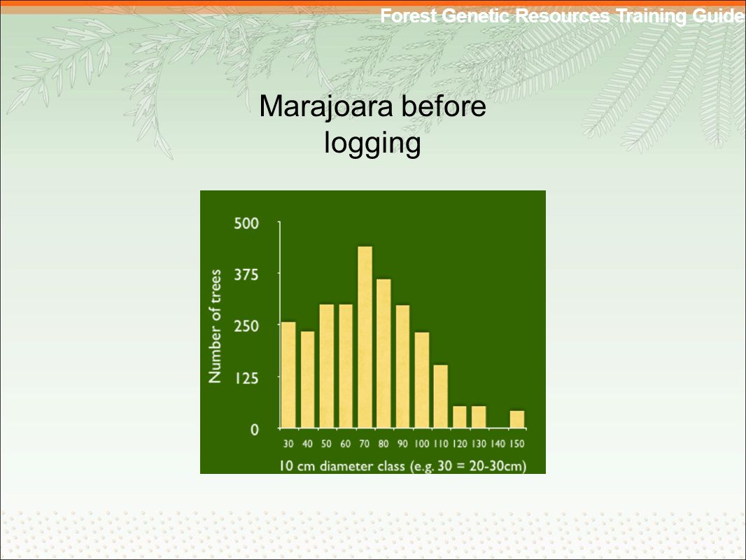 Forest Genetic Resources Training Guide Marajoara before logging
