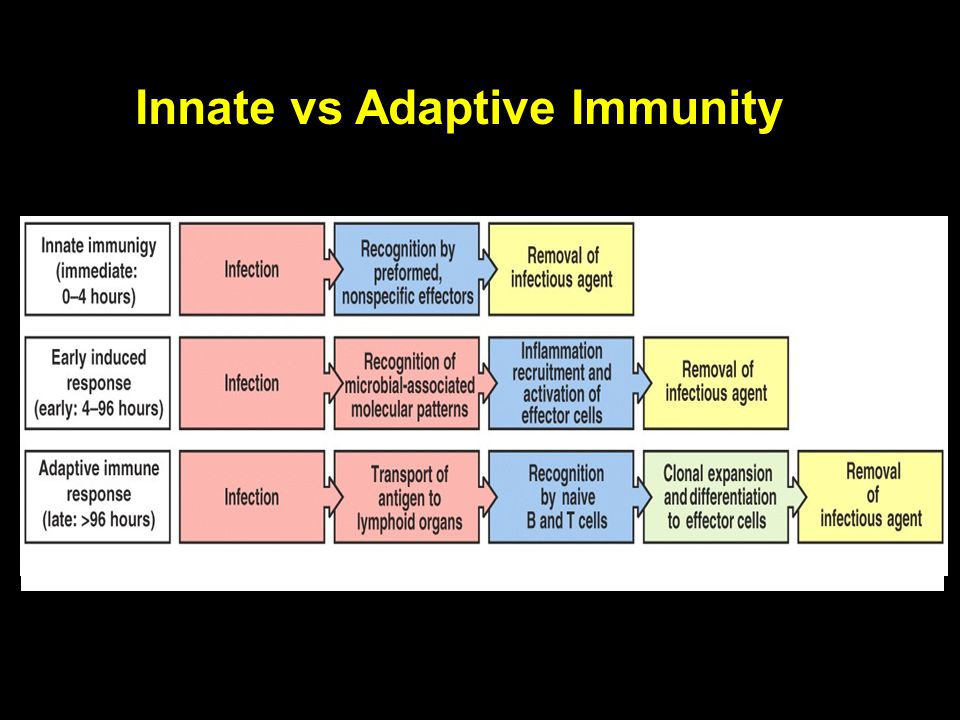 Innate vs Adaptive Immunity