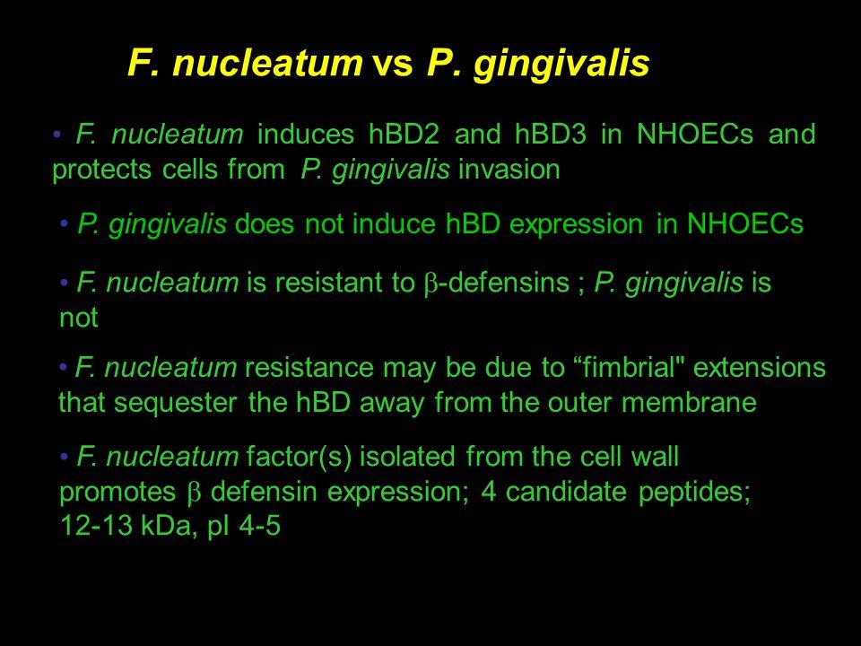 F. nucleatum vs P. gingivalis F.