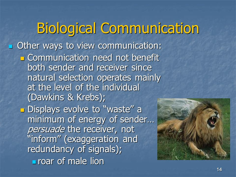 13 Biological Communication Value of information to each? Cont'd Sender unaffected or harmed, receiver benefits = exploitation or eavesdropping; Sende