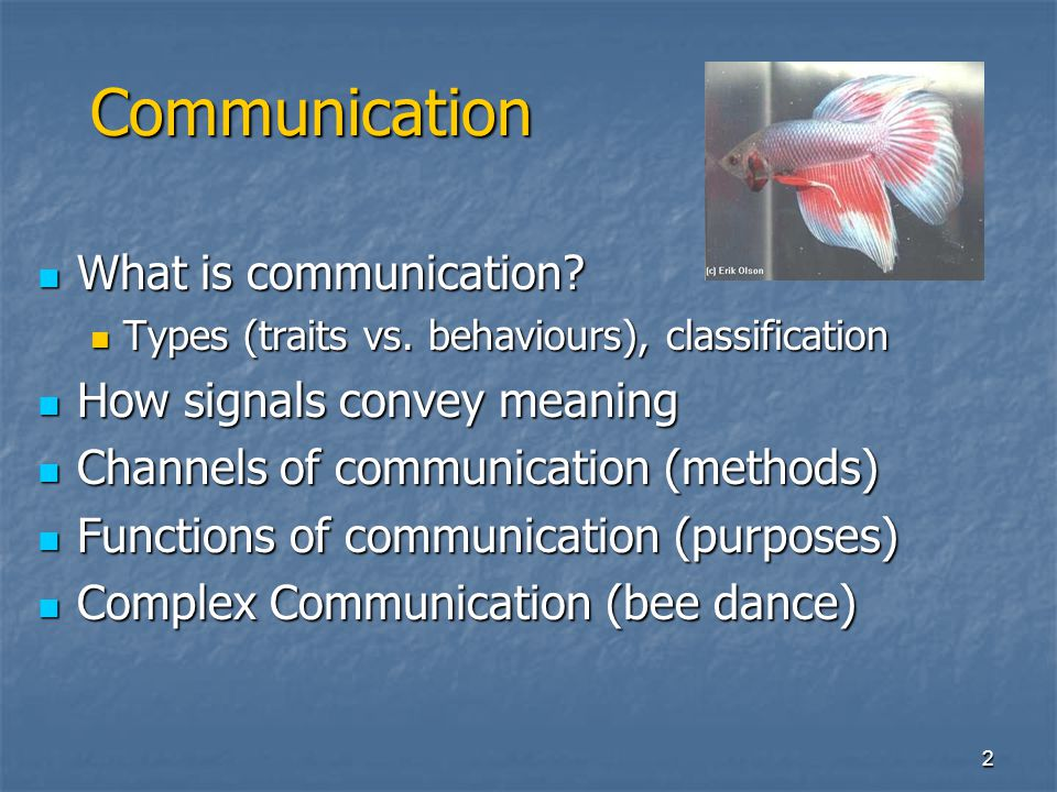 42 Functions of Communication Group Spacing & Coordination Group Spacing & Coordination Spacing signals of primates: Spacing signals of primates: Distance-increasing (branch shaking) Distance-increasing (branch shaking) Distance-maintaining (dawn chorus) Distance-maintaining (dawn chorus) Distance-reducing (contact/lost calls) Distance-reducing (contact/lost calls) Proximity-maintaining (social grooming) Proximity-maintaining (social grooming)