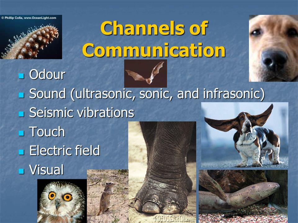23 Communication What is communication? What is communication? Types (traits vs. behaviours), classification Types (traits vs. behaviours), classifica