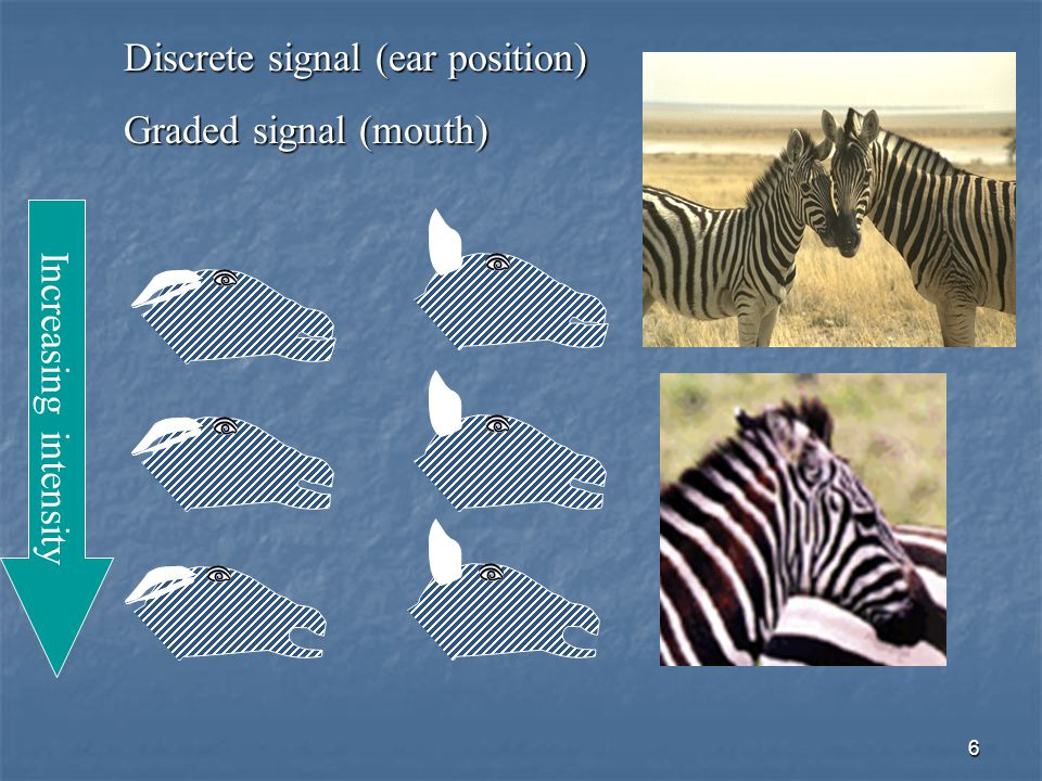 6 Increasing intensity Discrete signal (ear position) Graded signal (mouth)