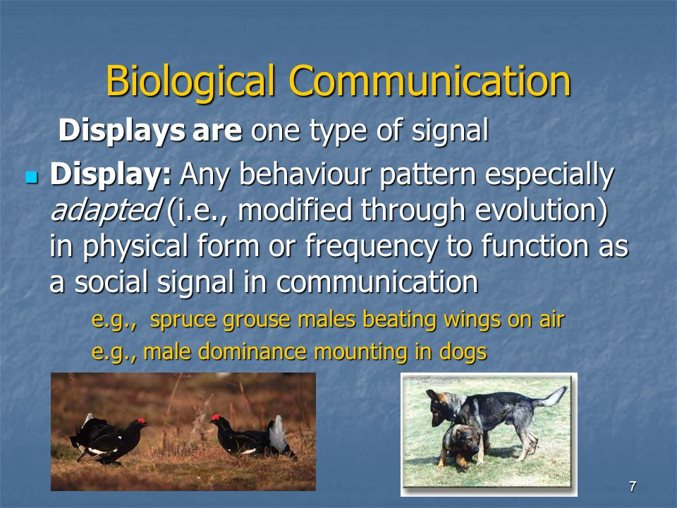 7 Biological Communication Displays are one type of signal Display: Any behaviour pattern especially adapted (i.e., modified through evolution) in physical form or frequency to function as a social signal in communication Display: Any behaviour pattern especially adapted (i.e., modified through evolution) in physical form or frequency to function as a social signal in communication e.g., spruce grouse males beating wings on air e.g., male dominance mounting in dogs