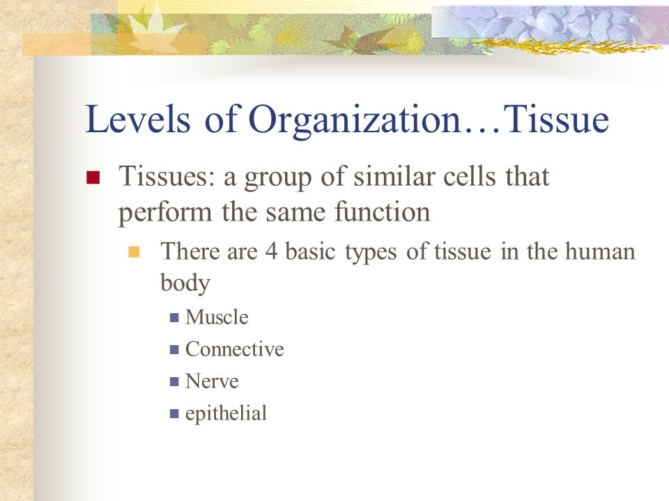Levels of Organization…Tissue Tissues: a group of similar cells that perform the same function There are 4 basic types of tissue in the human body Mus