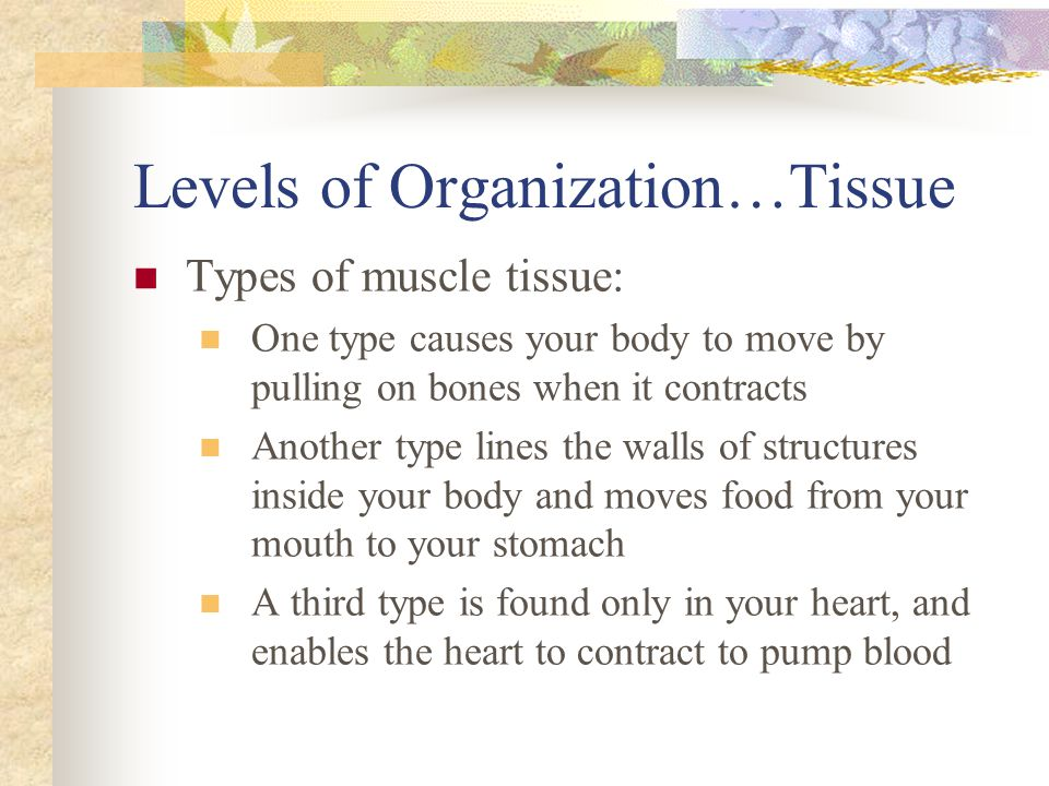 Levels of Organization…Tissue Types of muscle tissue: One type causes your body to move by pulling on bones when it contracts Another type lines the w