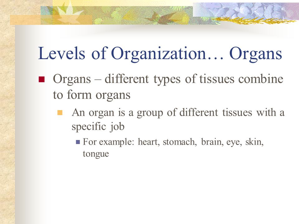 Levels of Organization… Organs Organs – different types of tissues combine to form organs An organ is a group of different tissues with a specific job