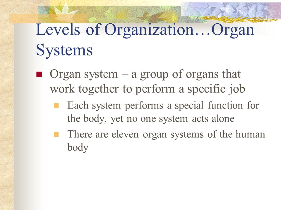 Levels of Organization…Organ Systems Organ system – a group of organs that work together to perform a specific job Each system performs a special func