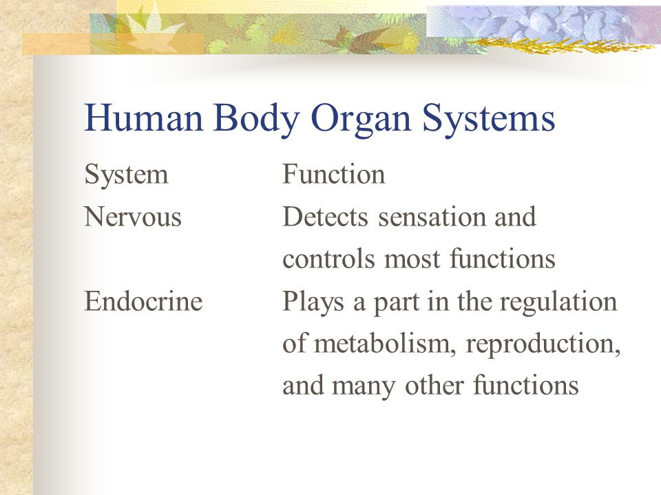 Human Body Organ Systems SystemFunction NervousDetects sensation and controls most functions EndocrinePlays a part in the regulation of metabolism, re