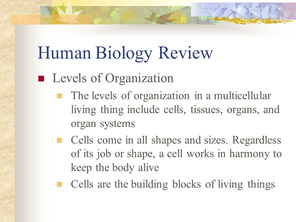 Human Biology Review Levels of Organization The levels of organization in a multicellular living thing include cells, tissues, organs, and organ syste