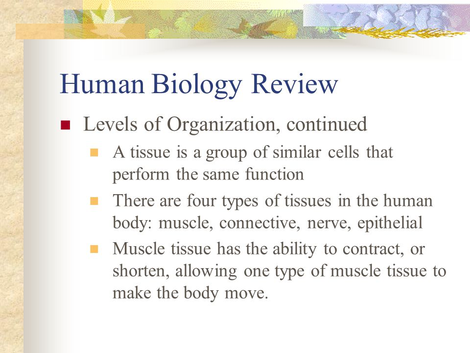 Human Biology Review Levels of Organization, continued A tissue is a group of similar cells that perform the same function There are four types of tis