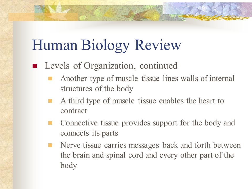 Human Biology Review Levels of Organization, continued Another type of muscle tissue lines walls of internal structures of the body A third type of mu