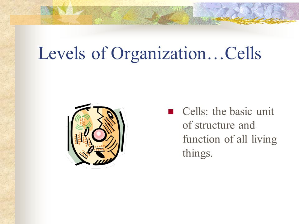 Human Biology Review Levels of Organization The levels of organization in a multicellular living thing include cells, tissues, organs, and organ systems Cells come in all shapes and sizes.