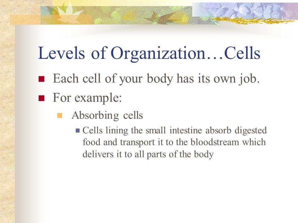 Levels of Organization…Cells Each cell of your body has its own job. For example: Absorbing cells Cells lining the small intestine absorb digested foo