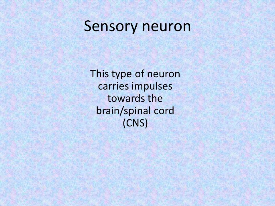 Sensory neuron This type of neuron carries impulses towards the brain/spinal cord (CNS)