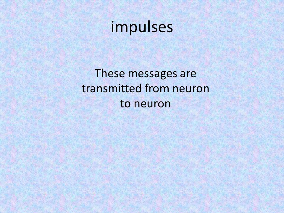 impulses These messages are transmitted from neuron to neuron