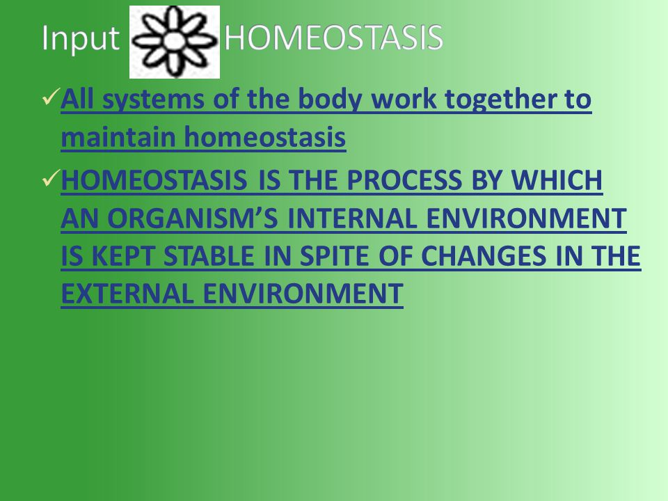 All systems of the body work together to maintain homeostasis HOMEOSTASIS IS THE PROCESS BY WHICH AN ORGANISM'S INTERNAL ENVIRONMENT IS KEPT STABLE IN SPITE OF CHANGES IN THE EXTERNAL ENVIRONMENT