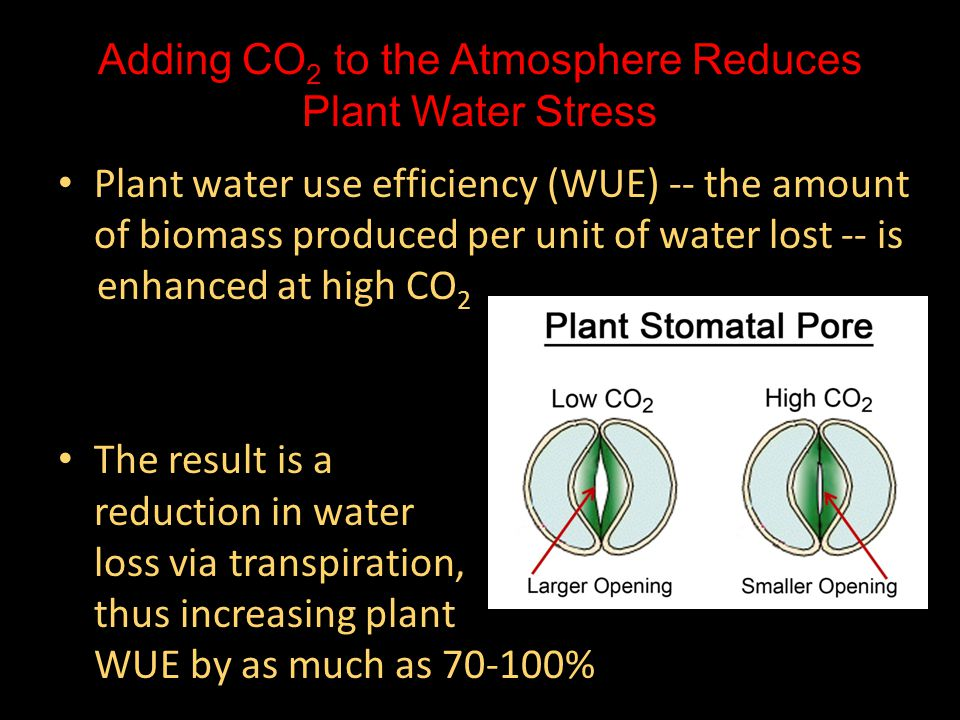 Adding CO 2 to the Atmosphere Reduces Plant Water Stress Plant water use efficiency (WUE) -- the amount of biomass produced per unit of water lost -- is Plant water use efficiency (WUE) -- the amount of biomass produced per unit of water lost -- is enhanced at high CO 2 enhanced at high CO 2 The result is a The result is a reduction in water loss via transpiration, thus increasing plant WUE by as much as 70-100%