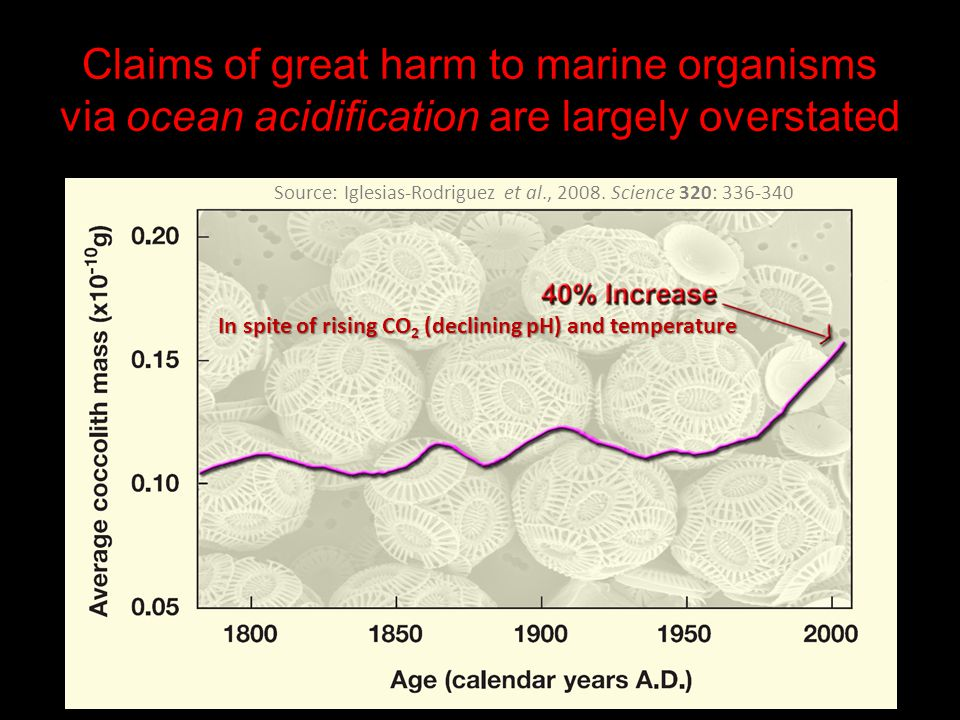 Claims of great harm to marine organisms via ocean acidification are largely overstated Source: Iglesias-Rodriguez et al., 2008. Science 320: 336-340
