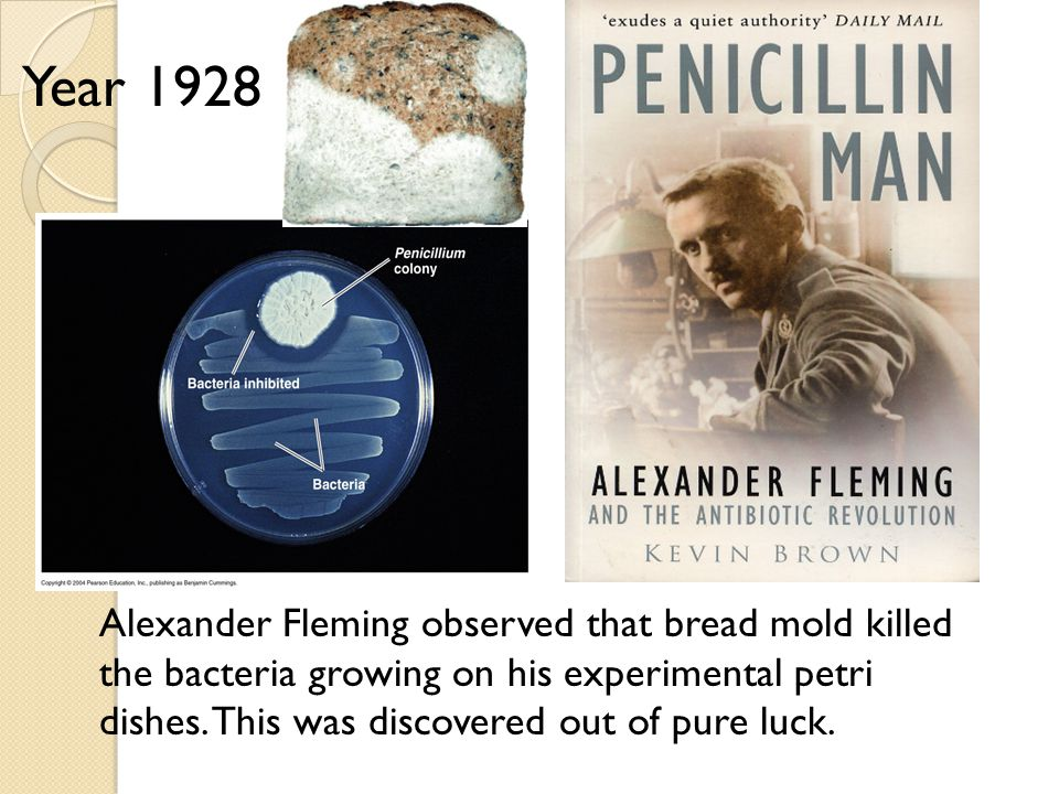 Alexander Fleming observed that bread mold killed the bacteria growing on his experimental petri dishes.