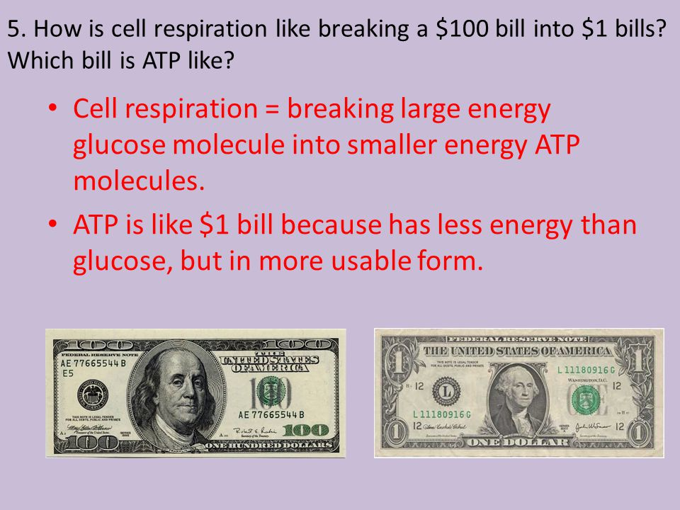 5. How is cell respiration like breaking a $100 bill into $1 bills.