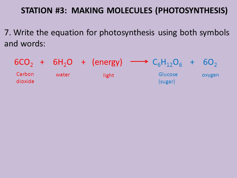 STATION #3: MAKING MOLECULES (PHOTOSYNTHESIS) 7.