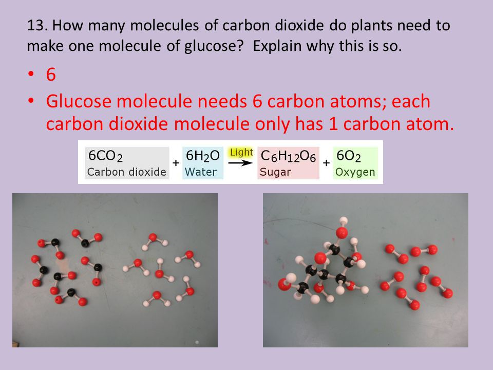13. How many molecules of carbon dioxide do plants need to make one molecule of glucose.
