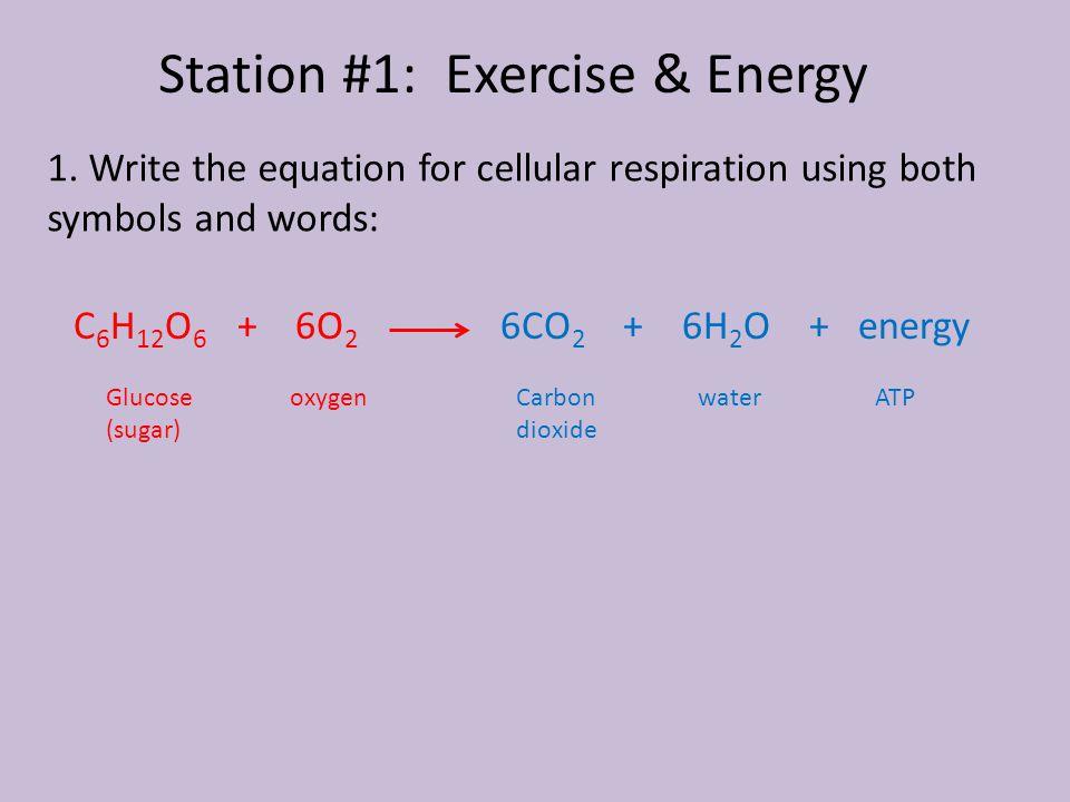 1. Write the equation for cellular respiration using both symbols and words: C 6 H 12 O 6 + 6O 2 6CO 2 + 6H 2 O + energy Glucose (sugar) oxygenCarbon