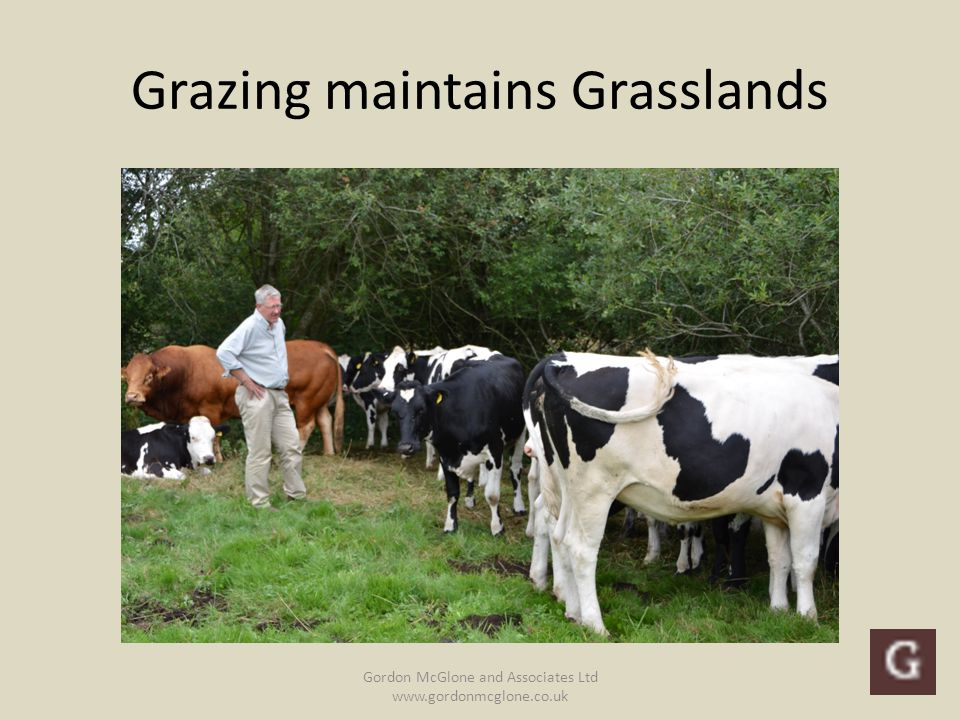 Grazing maintains Grasslands Gordon McGlone and Associates Ltd www.gordonmcglone.co.uk