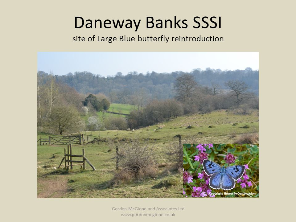 Daneway Banks SSSI site of Large Blue butterfly reintroduction Gordon McGlone and Associates Ltd www.gordonmcglone.co.uk Copyright Butterfly Conservation