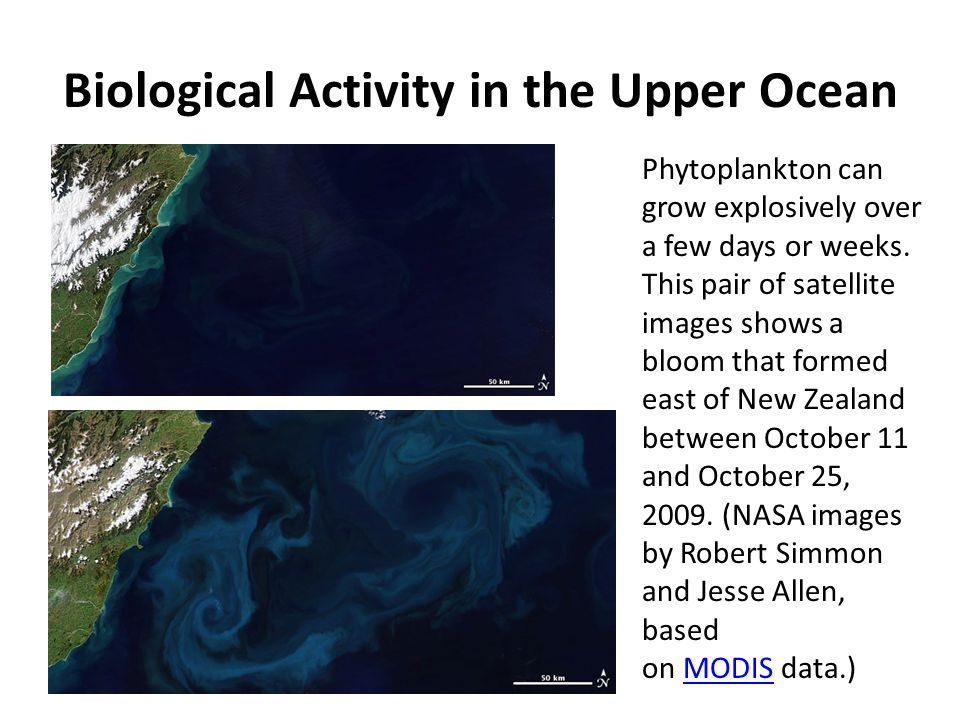 Biological Activity in the Upper Ocean Phytoplankton can grow explosively over a few days or weeks. This pair of satellite images shows a bloom that f