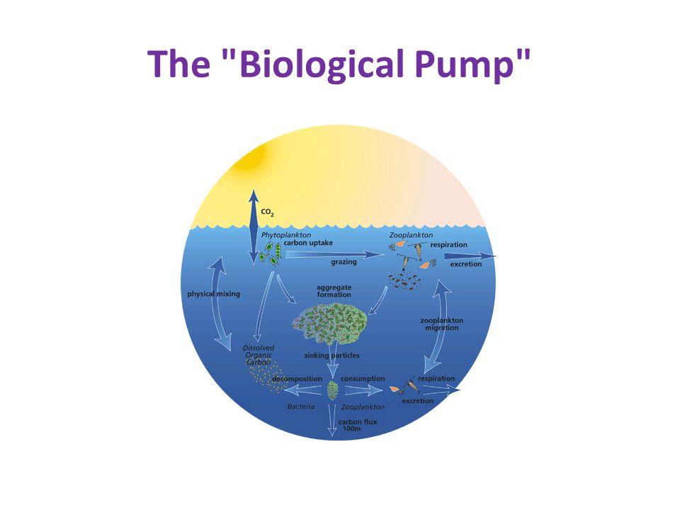 The Biological Pump