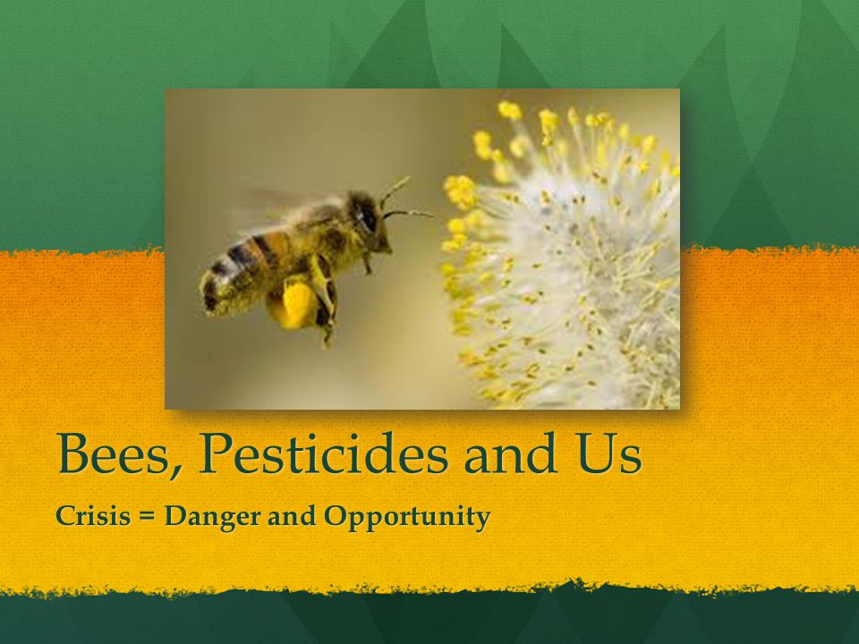 Bees, Pesticides and Us Crisis = Danger and Opportunity