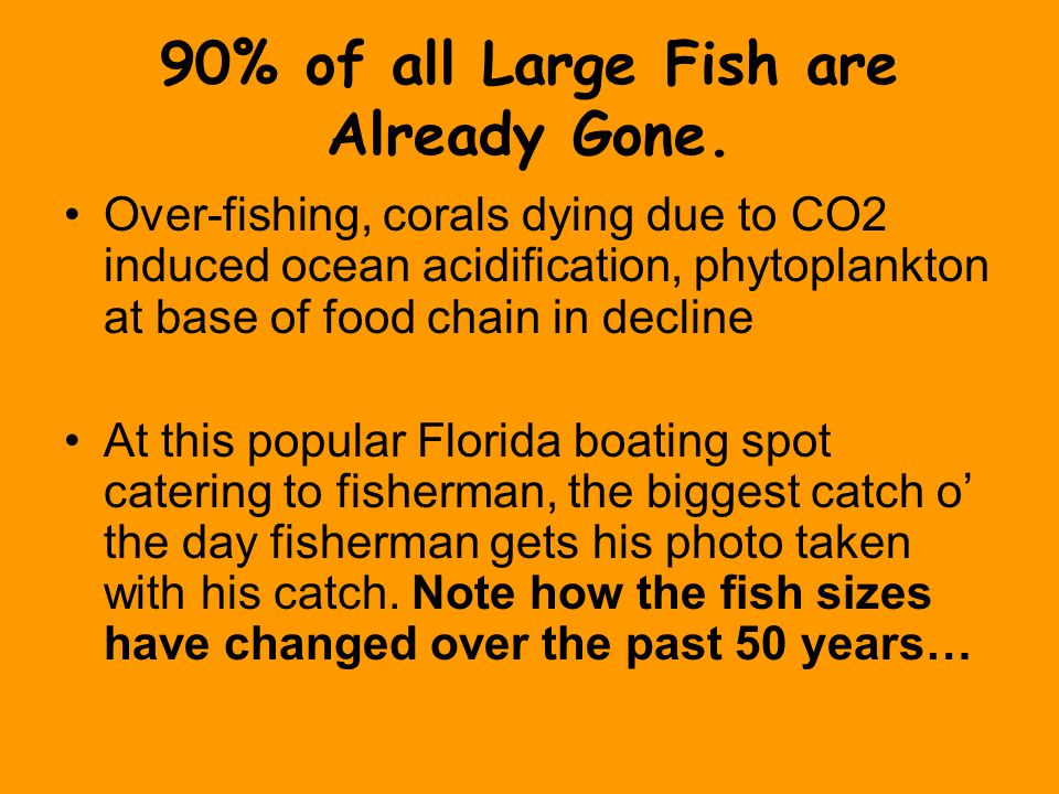 90% of all Large Fish are Already Gone.