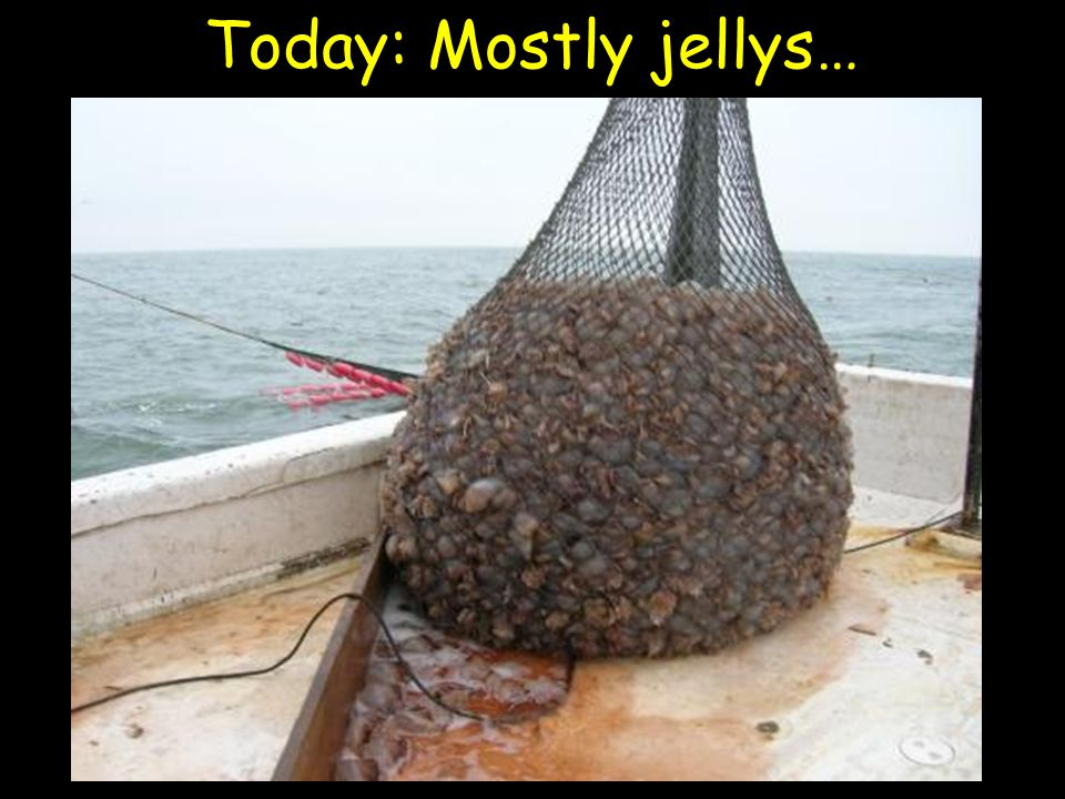Today: Mostly jellys…