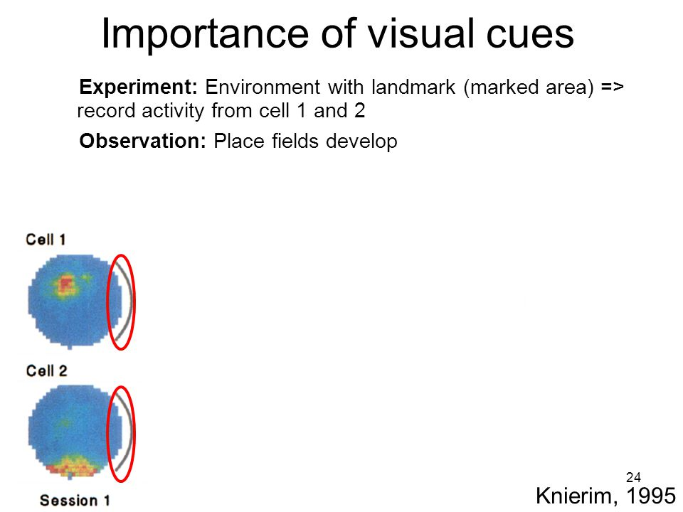 24 Importance of visual cues Knierim, 1995 Experiment: Environment with landmark (marked area) => record activity from cell 1 and 2 Observation: Place fields develop